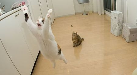 """Pick me, I know! Kitty porn!'"