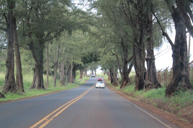 We took a quick jaunt up to Waialua this morning.