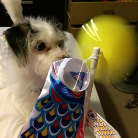 Curiosity killed the cat, but it only nipped the dog in the nose with a pinwheel.